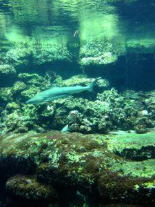 Hai-Aquarium im Tierpark Bochum